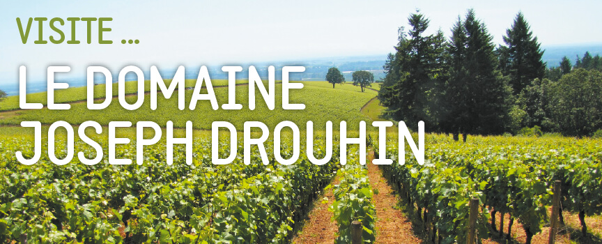 Read more about the article Visite… Le domaine Joseph Drouhin