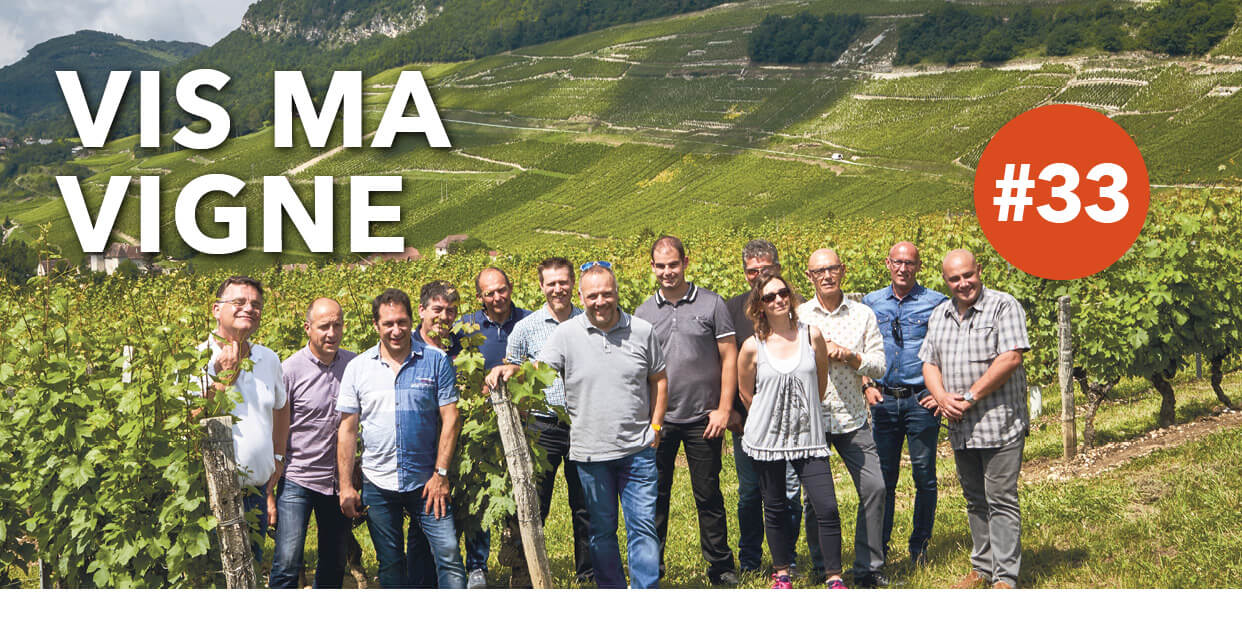 Read more about the article Vis ma vigne