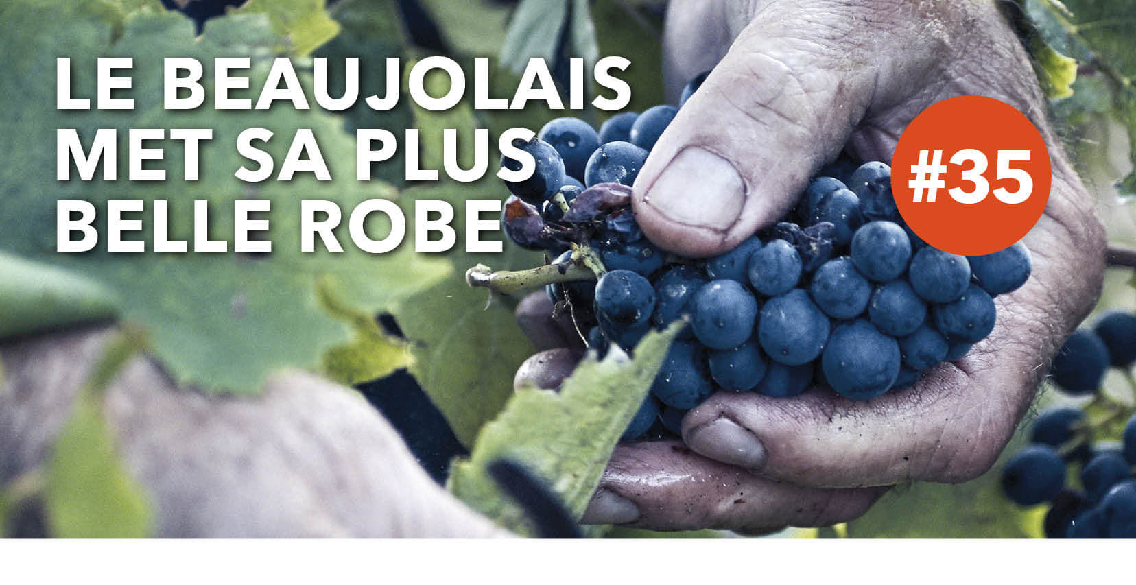 Read more about the article Le Beaujolais met sa plus belle robe !